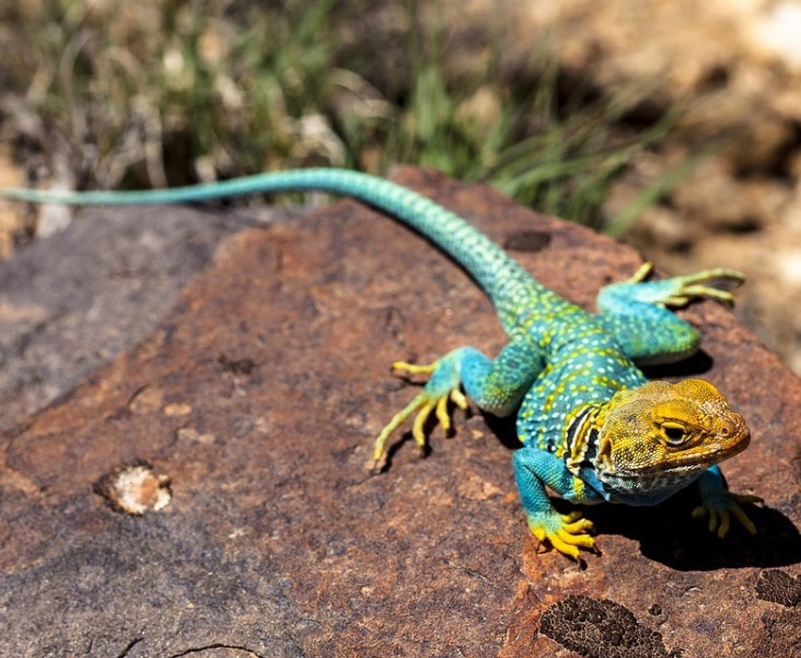 lizard4 - Parents Receive Hilarious News After Taking Their Son's Sick Lizard To The Vet: 'Hey Son.. Lizard J**K Off Too...'