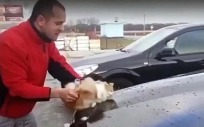 2 74 - '새끼 고양이'를 차량 청소용 스펀지로 사용한 남성 (영상)