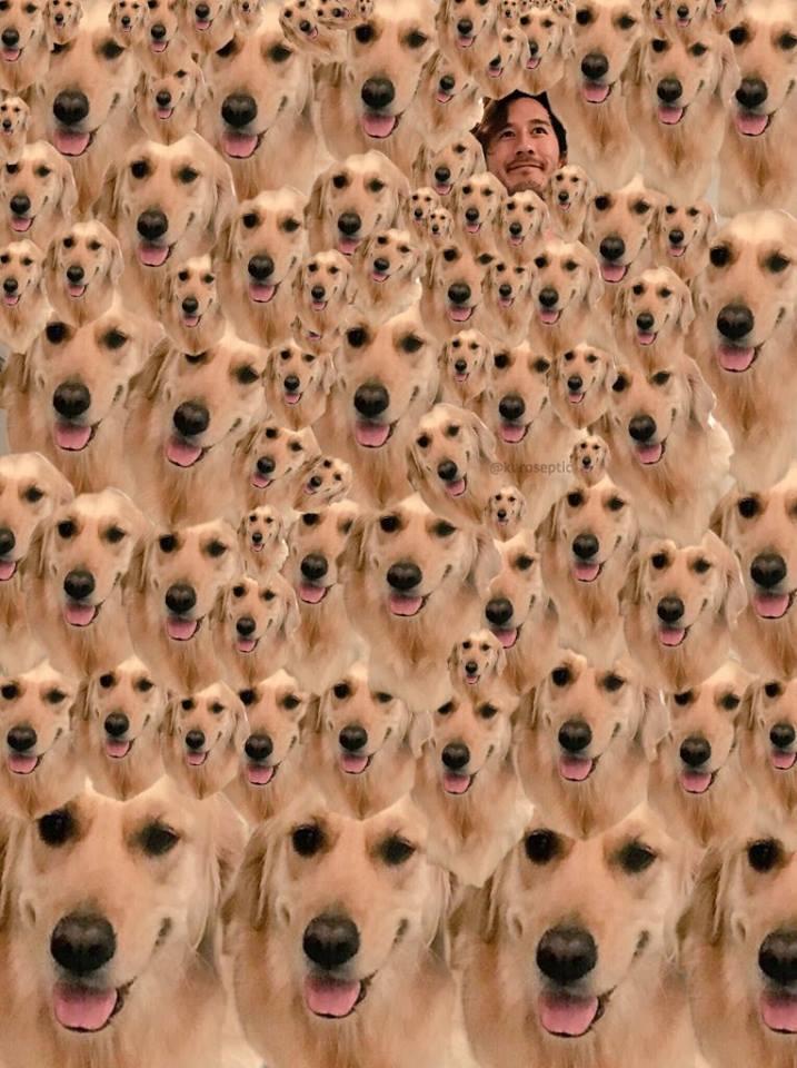 22140919 1464621773592709 3873257769873529003 n - 超鬧!請網友P圖惹來無止盡惡搞,原PO求饒「我只是想摸狗狗」