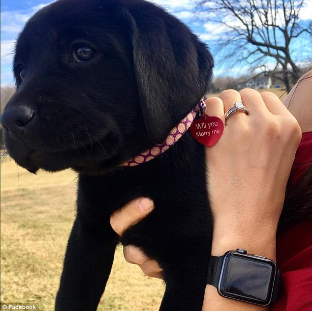 48cb5ccc00000578 5339911 image a 57 1517499715149 - Surprise Of Life―Woman Receives A Puppy And A Proposal At The Same Time