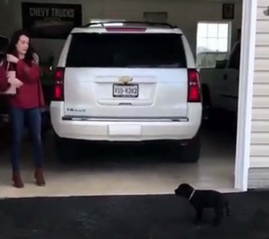 a brand new puppy 1 - Surprise Of Life―Woman Receives A Puppy And A Proposal At The Same Time