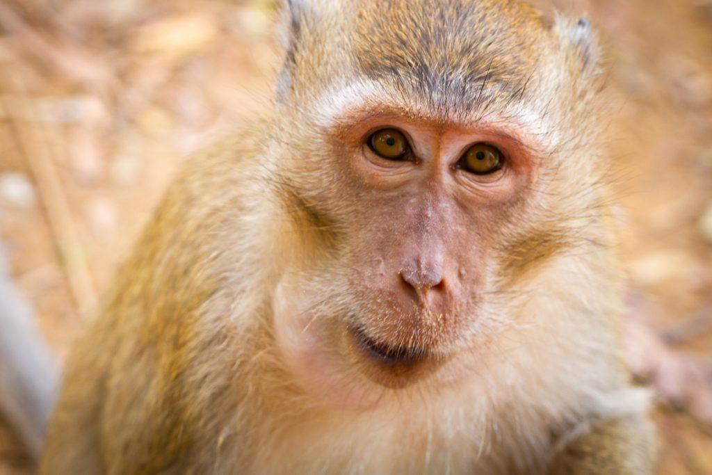 depositphotos 16327439 l 2015 1024x683 - Volkswagen s'excuse pour ses tests de pollution sur des singes