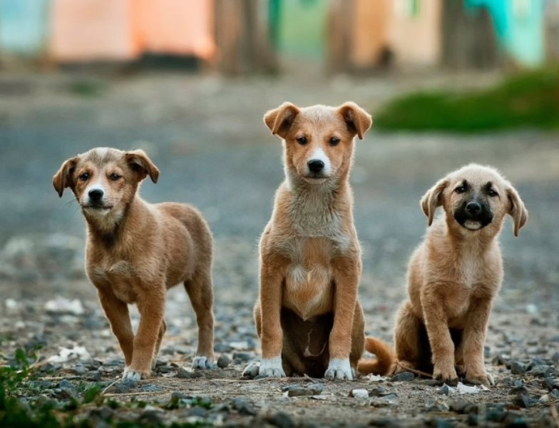 dogs - Grieving Stray Dogs Block Traffic To Protect The Body Of Another Dog Killed In Hit And Run