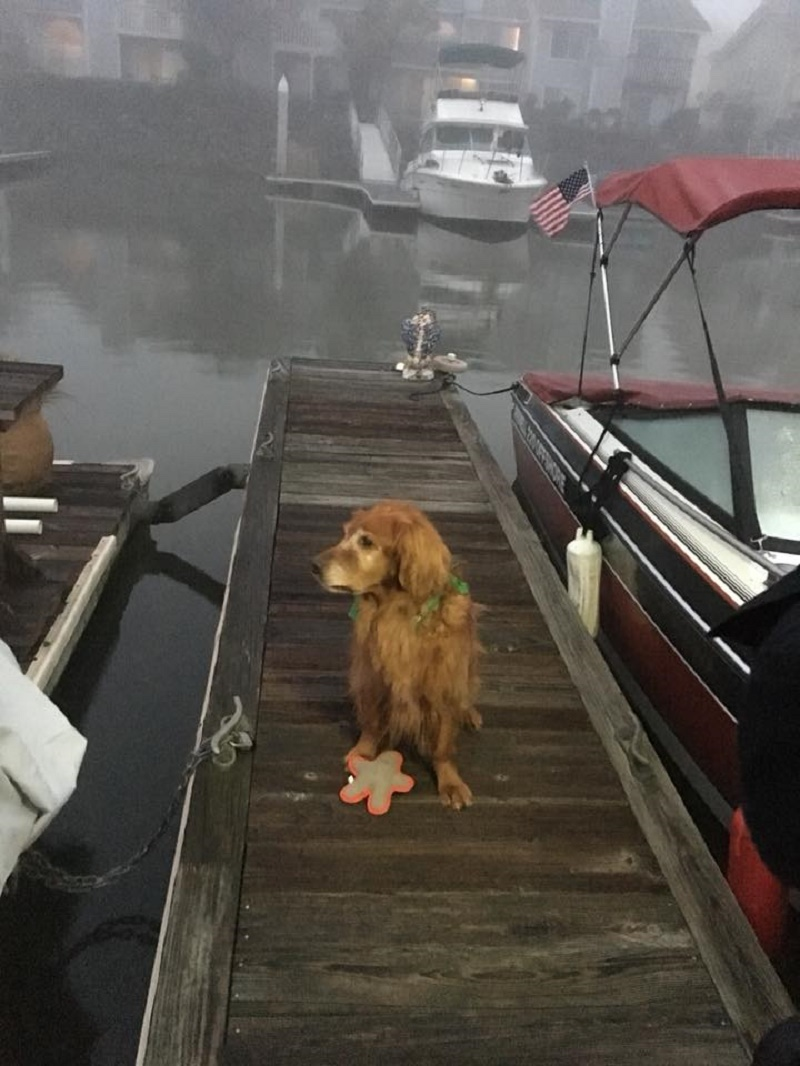 hero dog 2 - Elderly Man Accidentally Falls In The Docks Of Marina. Immediately, This 'Savior Dog' Knows He Needs Help