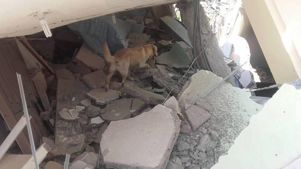 img 5a7e0abe4955a - 搜救犬在災區「全力救援」找到生還者後自己卻不幸殉職...