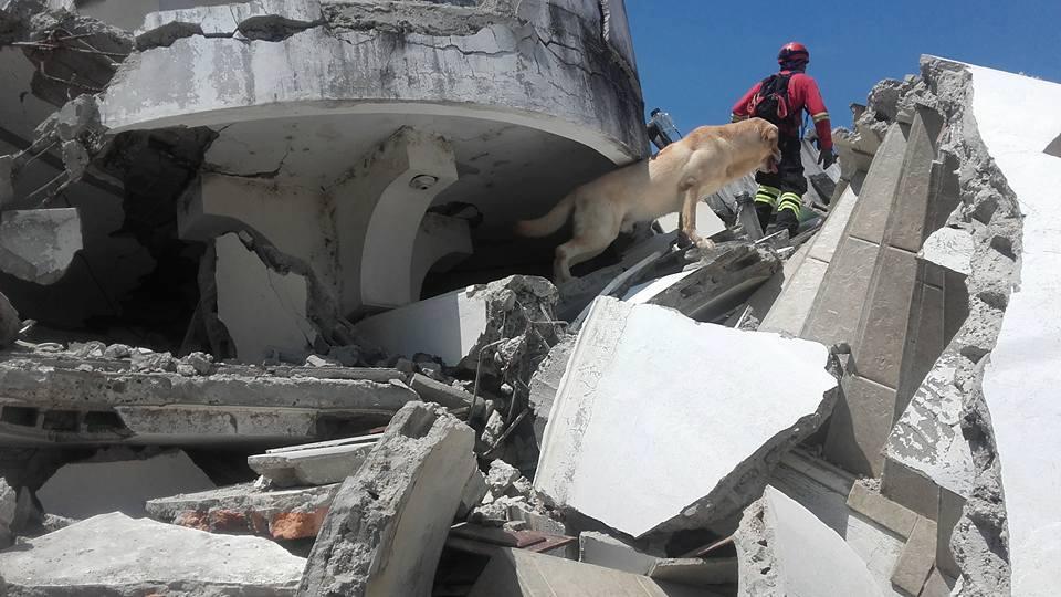 img 5a7e0af3a017c - 搜救犬在災區「全力救援」找到生還者後自己卻不幸殉職...