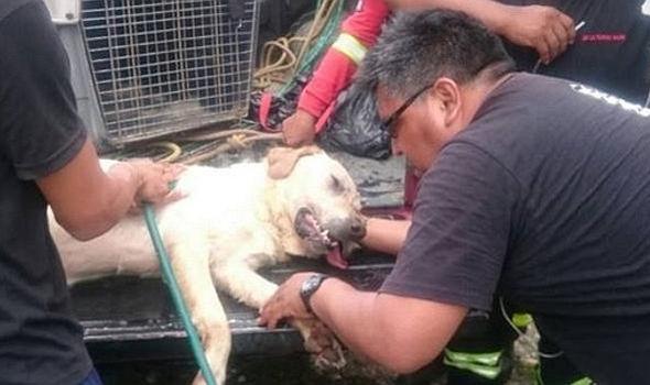 img 5a7e0b1a15e84 - 搜救犬在災區「全力救援」找到生還者後自己卻不幸殉職...
