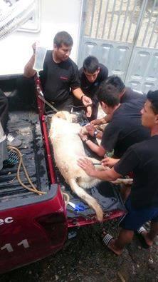 img 5a7e0b5001c8c - 搜救犬在災區「全力救援」找到生還者後自己卻不幸殉職...