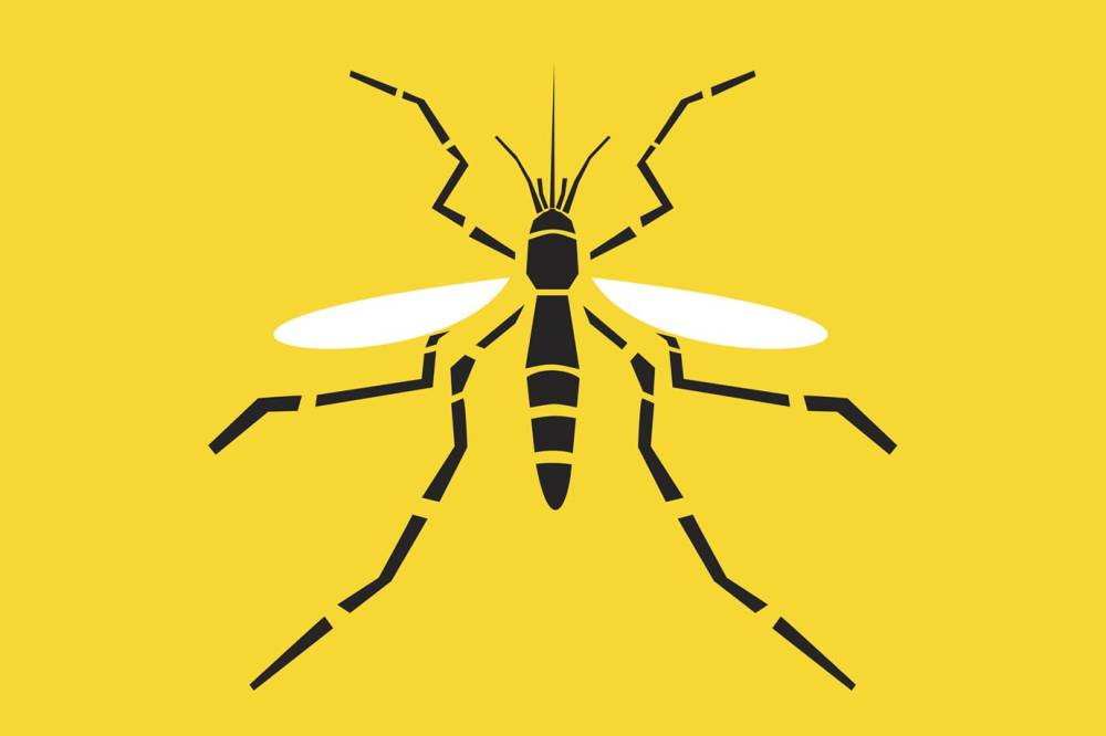 mosquito - Brasileira cria biorrepelente eficaz contra mosquito da febre amarela. E o melhor, dura até 60 dias!