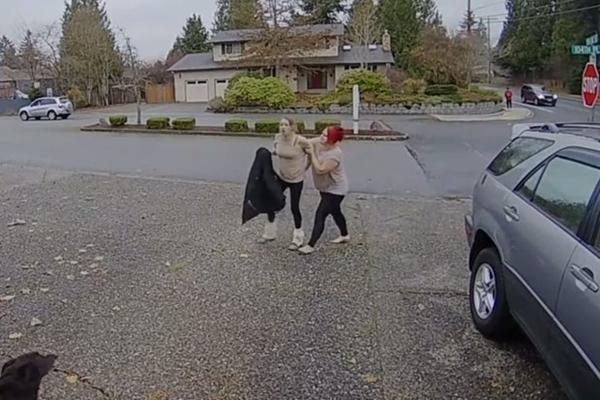 1 206 - 상습 택배 도둑을 완벽하게 제압하는 '유모' 화제 (영상)