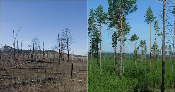1 219 - 국내의 한 기업이 몽골 초원에 천만 그루 나무 심은 사연
