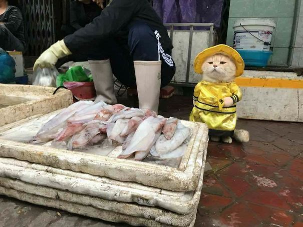 1 5a9e56520977d  605 - This Adorable Fish Vendor Keeper In Vietnam Will Definitely Melt Your Heart