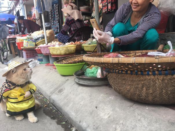 11 5a9e518dd0062  605 - This Adorable Fish Vendor Keeper In Vietnam Will Definitely Melt Your Heart