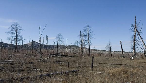 2 188 - 국내의 한 기업이 몽골 초원에 천만 그루 나무 심은 사연