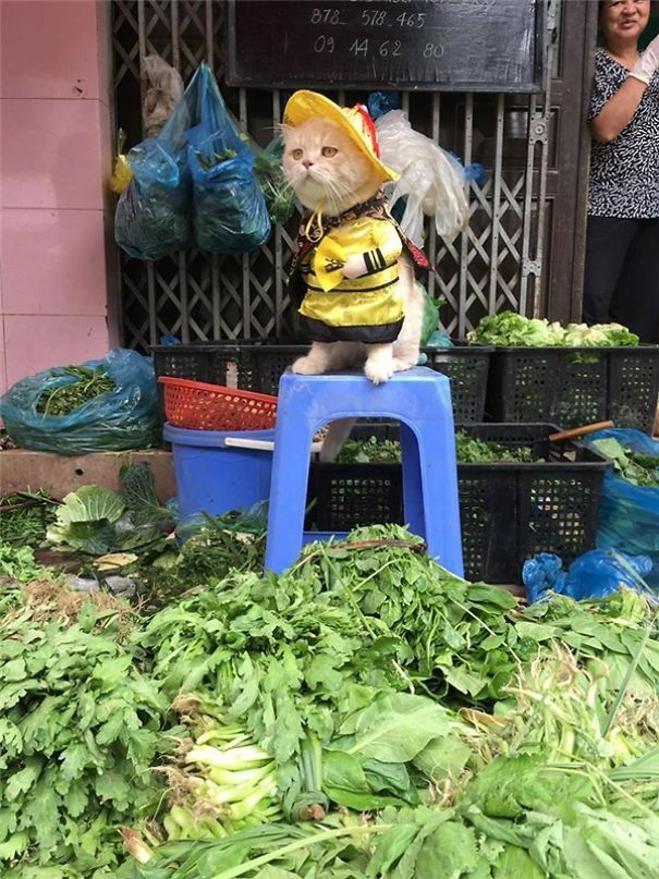 20170413 041051 5 600x800 5a9e5226d4603  605 - This Adorable Fish Vendor Keeper In Vietnam Will Definitely Melt Your Heart