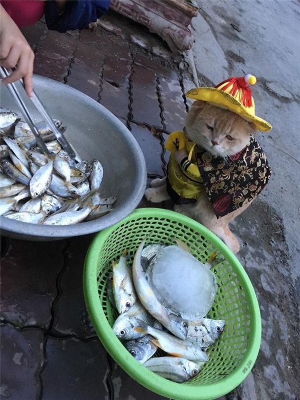 20170413 041149 2b 600x800 5a9e5235f1959  605 - This Adorable Fish Vendor Keeper In Vietnam Will Definitely Melt Your Heart