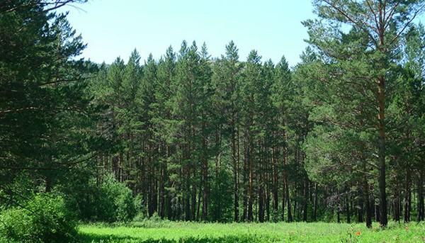 3 183 - 국내의 한 기업이 몽골 초원에 천만 그루 나무 심은 사연