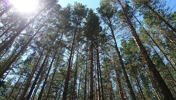 4 169 - 국내의 한 기업이 몽골 초원에 천만 그루 나무 심은 사연