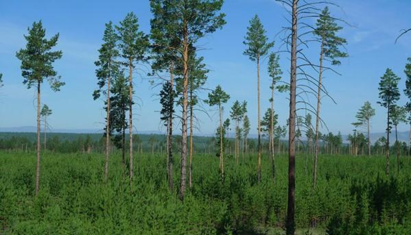 5 133 - 국내의 한 기업이 몽골 초원에 천만 그루 나무 심은 사연