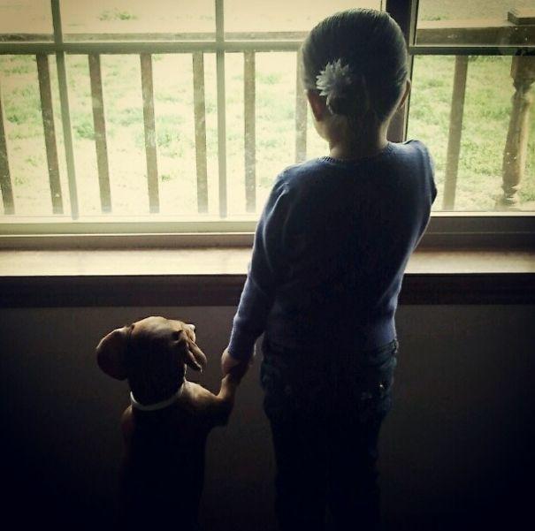 5a97fd5b513dc wlbvbtt  605 - 小孩和狗的組合跟本可愛加倍、療癒感也加倍,來看看這些孩子們和寵物狗的可愛互動!