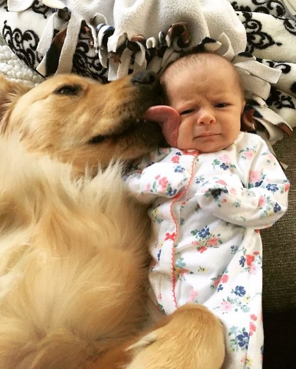5a981bb565320 ibtqfg9pmfwy  605 - 小孩和狗的組合跟本可愛加倍、療癒感也加倍,來看看這些孩子們和寵物狗的可愛互動!