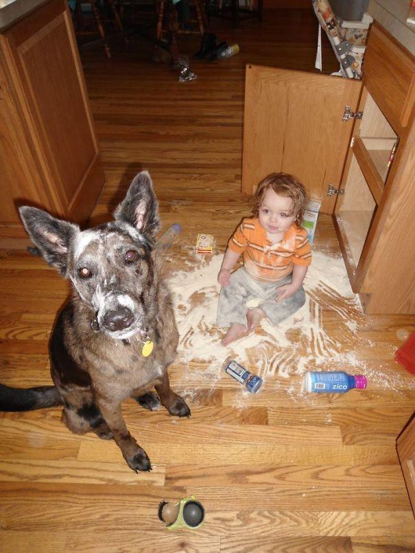 5a9917b45475c fvmtv  605 - 小孩和狗的組合跟本可愛加倍、療癒感也加倍,來看看這些孩子們和寵物狗的可愛互動!