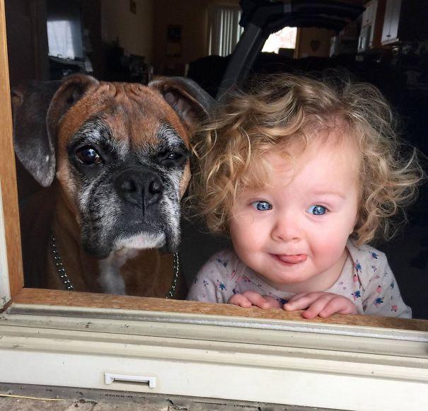5a99443a2f7d2 xkb2r8kr  605 - 小孩和狗的組合跟本可愛加倍、療癒感也加倍,來看看這些孩子們和寵物狗的可愛互動!