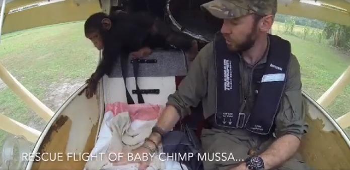 img 5a9e303342077 - 엄마 잃고 떠돌다 구조된 아기 침팬지의 첫 번째 비행 (영상)