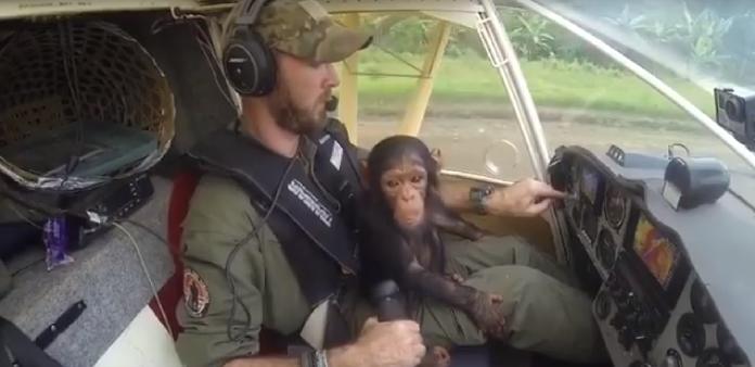 img 5a9e3086cabc6 - 엄마 잃고 떠돌다 구조된 아기 침팬지의 첫 번째 비행 (영상)