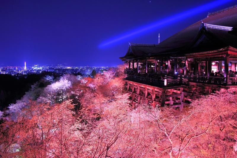 清水寺 春・夜の特別拝観에 대한 이미지 검색결과