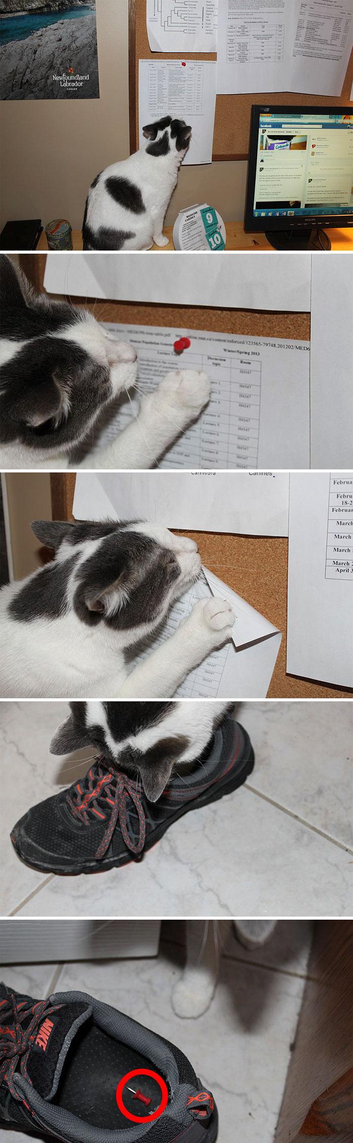 cats-causing-menace-1