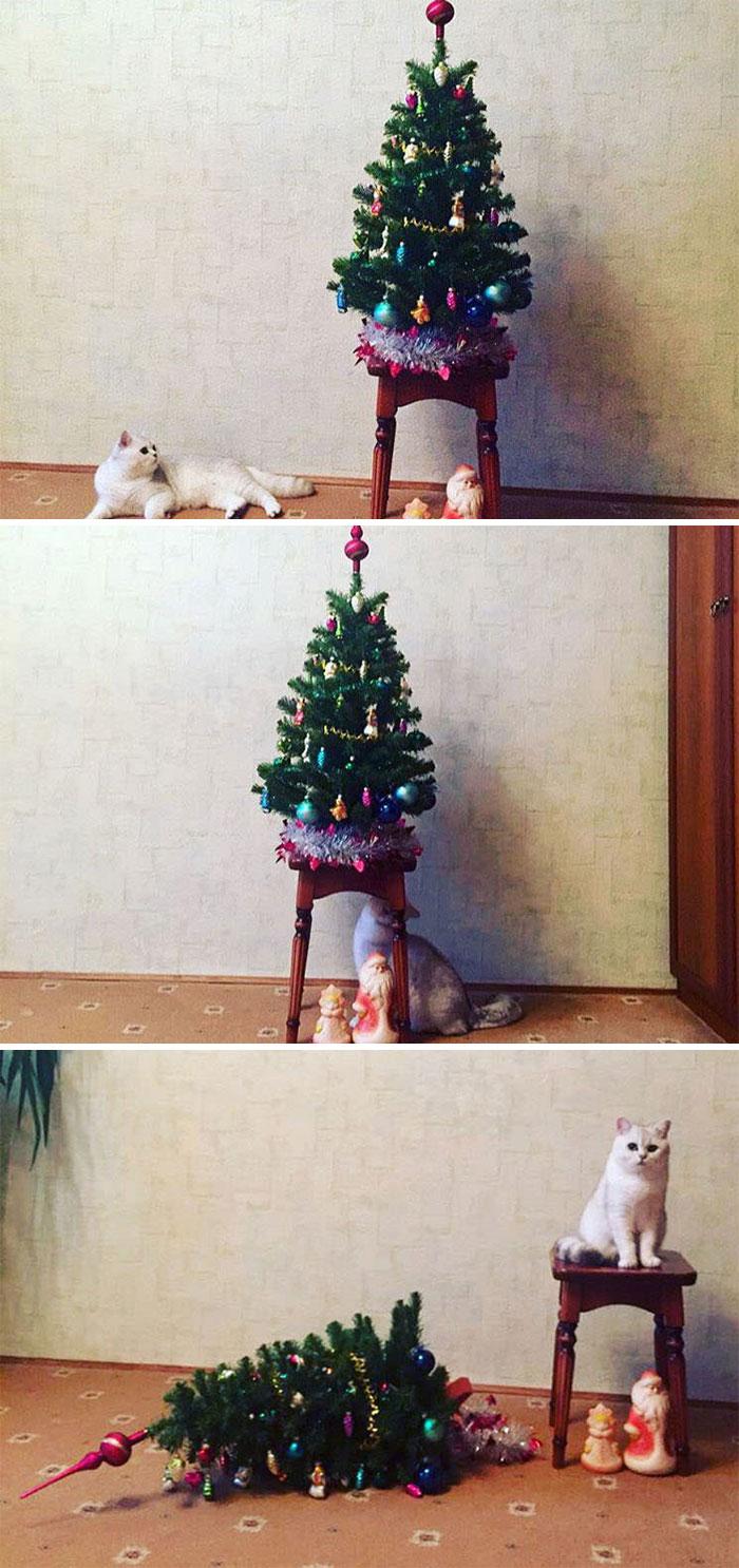 cats-causing-menace-2