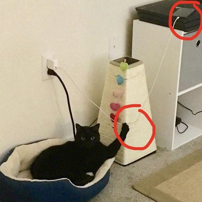 cats-causing-menace-5