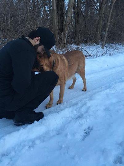 cão-despreza-todos-depois-proprietário-morre-6