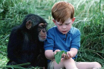 チンパンジーと人間에 대한 이미지 검색결과