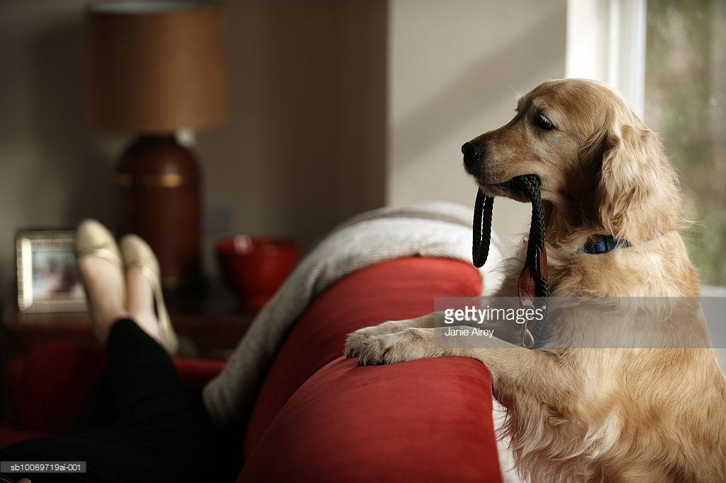 人間が動物と話す에 대한 이미지 검색결과