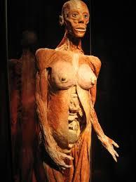 「장웨이제 인체표본」の画像検索結果