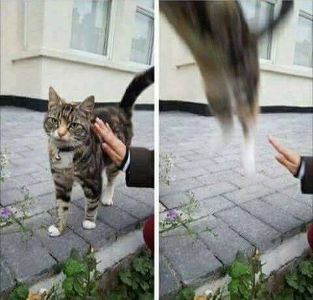Cat escaping a pat