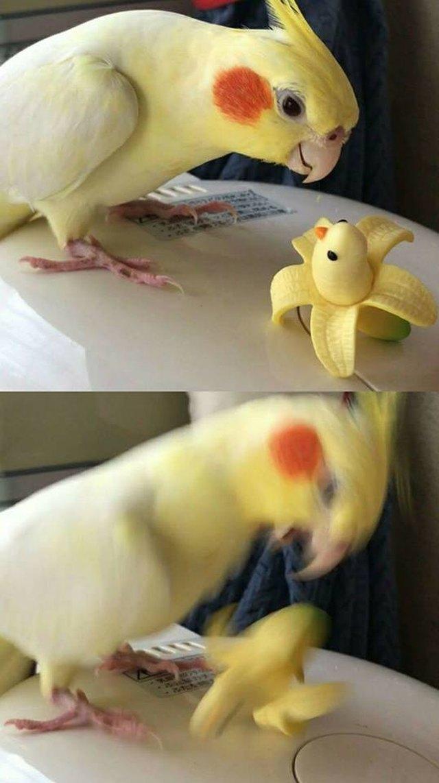 Bird attacking a banana dressed up like the bird