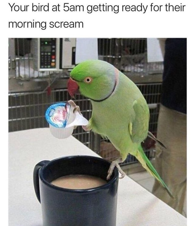 Bird pouring creamer into a cup of coffee.