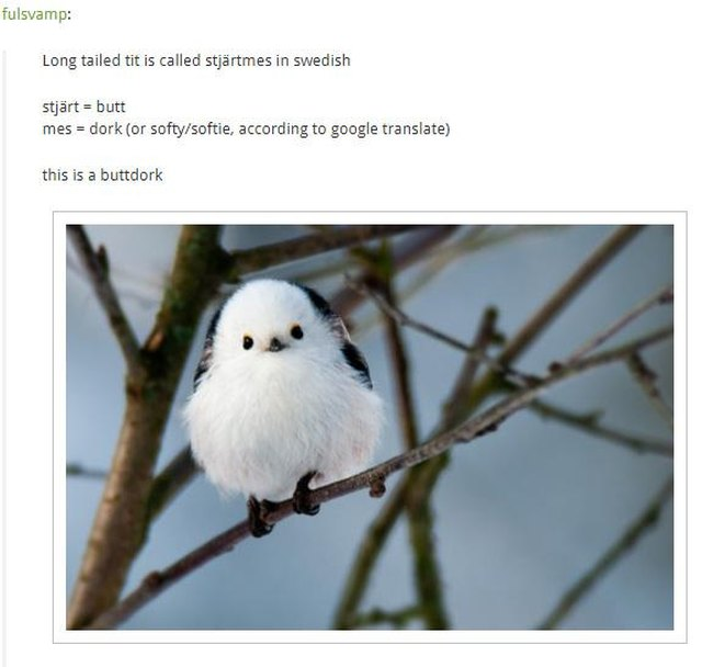 "Translation of the Swedish name for the long tailed tit is ""buttdork"""