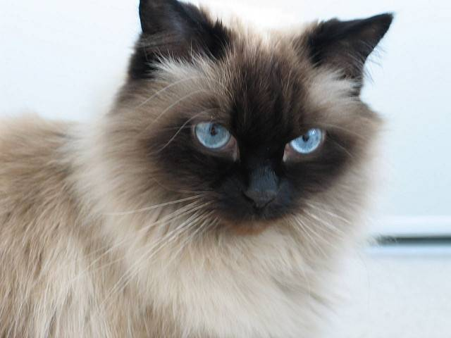 Amazing facts about cats and kittens