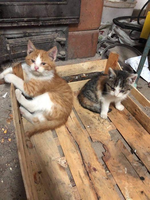 Małe kotki szukają domu, oddam koty PILNIE!