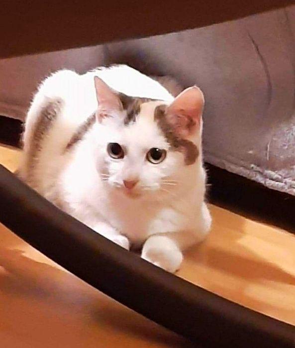 Smutny los kociej zabawki...12 tygodniowa koteczka.
