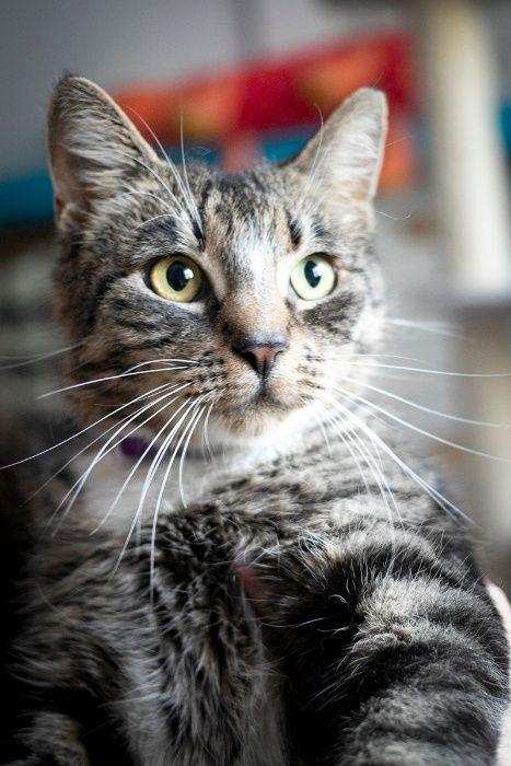 2-letnia kotka Soja szuka ciepłego domu
