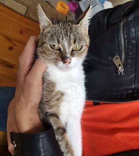 Bera - koteczka milusińska o oryginalnej urodzie :)