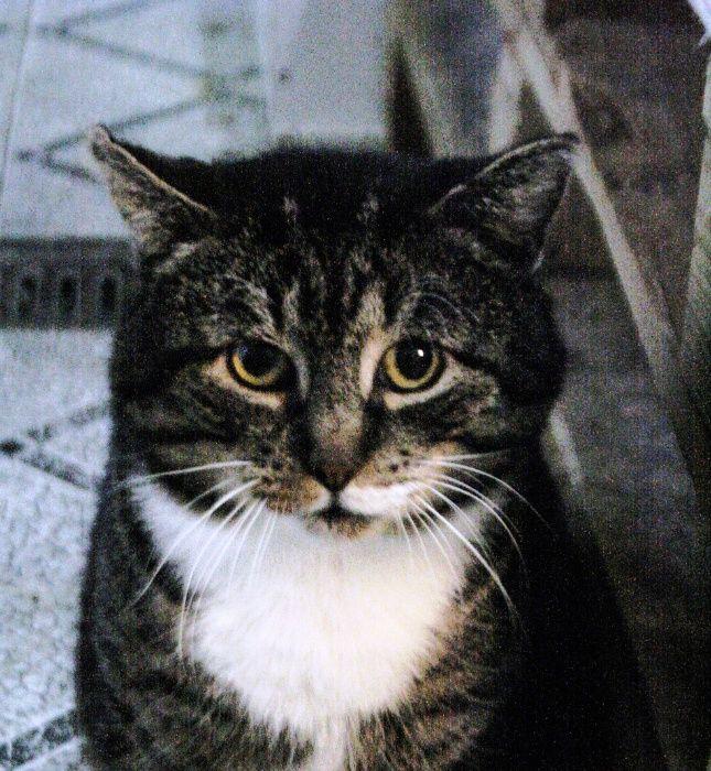 Tytus Pan Kot