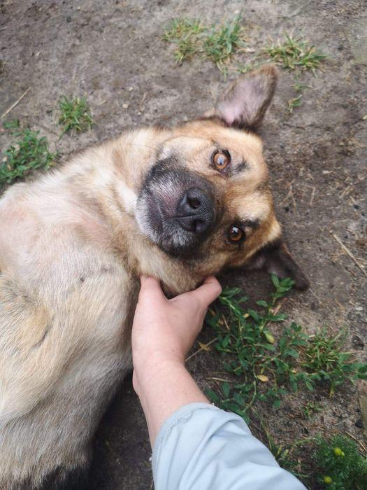 Azor kochany pies szuka domu !