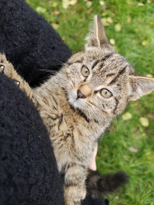 Kotki kotek mały