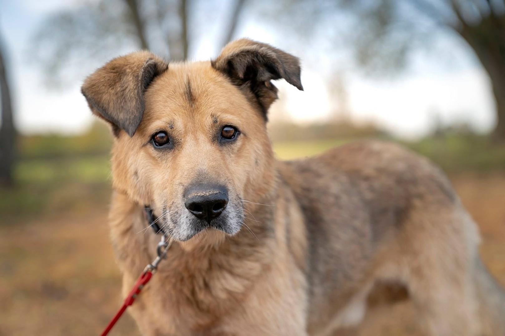 Gucio, cudowny psiak uratowany przed śmiercią